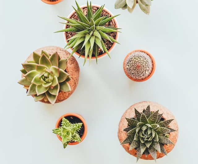 how to style green plants